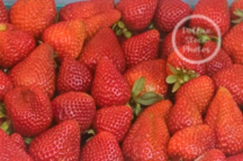 Dollar Stock Photo 77 Strawberries