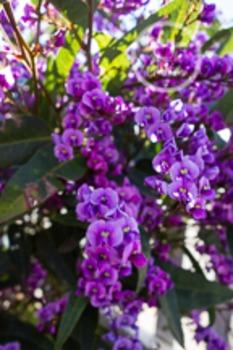 Dollar Stock Photo 99 Purple Flowers
