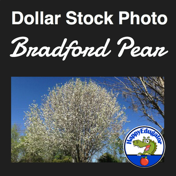 Dollar Stock Photo - Bradford Pear Tree