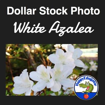 Dollar Stock Photo - White Azalea Flowers