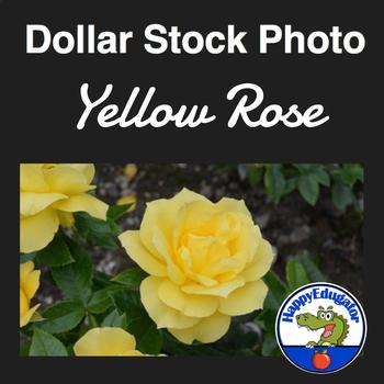 Dollar Stock Photo - Yellow Rose Flower