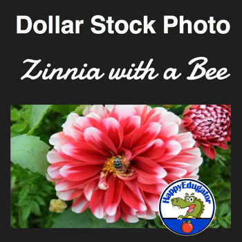 Dollar Stock Photo - Flower - Zinnia with a Bee