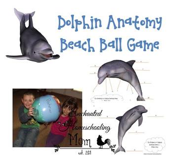 Dolphin Anatomy Beach Ball Games