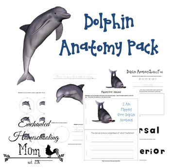 Dolphin Anatomy Pack
