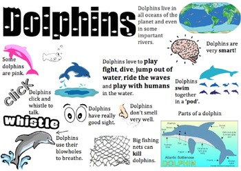 Dolphin Information Report Visual