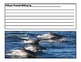 Dolphin Picture Prompt Daily Writing Printables