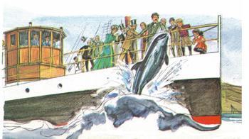 Dolphin Story LEGENDARY PELORUS JACK 6 Multiple Choice Qs Reading Comprehension