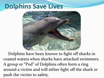 Dolphins - Marine Life Vol. 8 - Slideshow Powerpoint Presentation