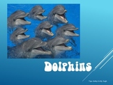 Dolphins PowerPoint