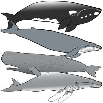 Dolphins and Whales Clip Art Set