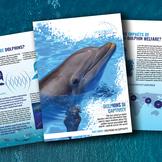 Dolphins in Captivity Fact Sheet
