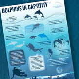 Dolphins in Captivity Infographic