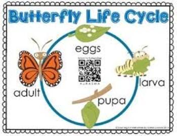 Domain 6 Life cycles zip file