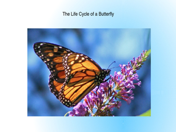 Domain 6: The life cycle of a butterfly