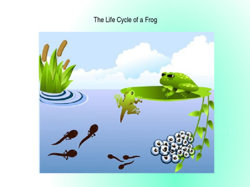 Domain 6: The life cycle of a frog