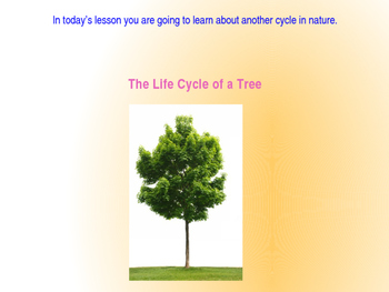 Domain 6: The life cycle of a tree