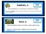 Domain 8 Insects Vocab Cards
