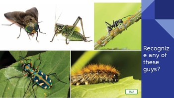 Domain 8 Lesson 1 Insects