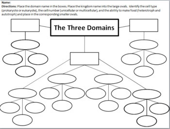 Taxonomy Concept Map Answers.Domain And Kingdom Classification Concept Map And Graphic Organizer