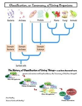 Domains, Cells, Kingdoms Coloring Book