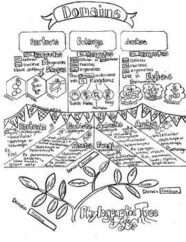 Domains & Kingdoms Sketch Notes W/Tcher Guide, Notes & Student FIB Sketch Notes!