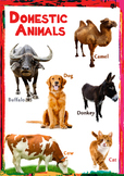 Domestic animals Flash card