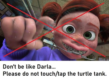 Don't be Darla... Please do not touch/tap the turtle tank. Classroom sign