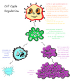 Doodle Map: Cell Cycle Regulation and Cancerous Cells