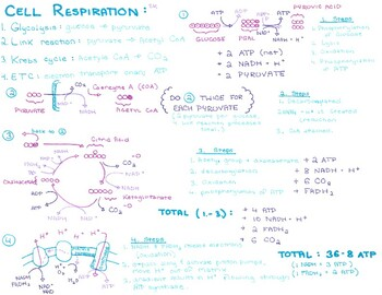 Doodle Notes Bundle