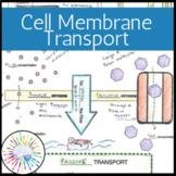 Doodle Notes: Cell Membrane Transport (Passive & Active Tr