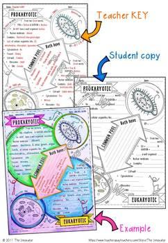 Doodle Notes - Prokaryotic and Eukaryotic Cells