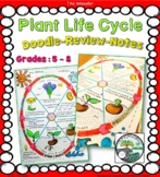 """Doodle-Review-Notes """"Plant Life Cycle"""""""