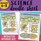Doodle Sheet - Comparing Prokaryotic and Eukaryotic Cells