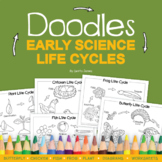 Doodles Early Science Life Cycle Diagrams and Worksheets   Life Cycle of Plants