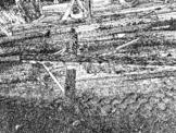 Downed Telephone Poles Photo Clip Art & Line Art (CU OK)