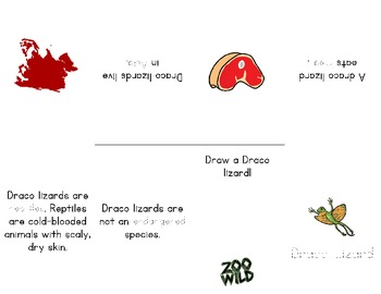 Draco Lizard -- 10 Resources -- Coloring Pages, Reading & Activities