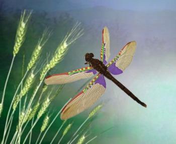 Dragonfly Life Cycle and Metamorphosis