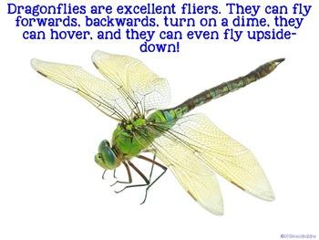 Dragonflies {science}