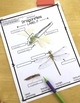 Dragonflies Differentiated Reading Passages with Vocabulary & Comprehension
