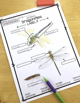 Insects Activity | Dragonflies Reading Passages, Vocabulary & Comprehension