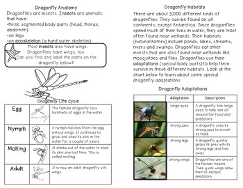Dragonflies: minibook on adaptations, life cycle and habitats