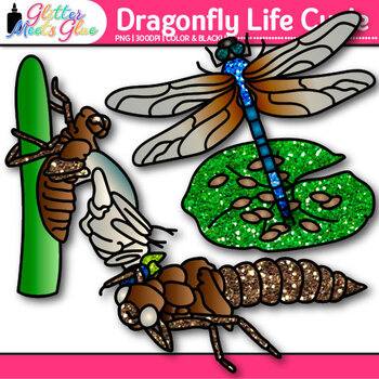Dragonfly Life Cycle Clip Art {Great for Animal Groups, Insect, & Bug Resources}