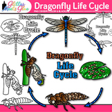 Dragonfly Life Cycle Clip Art {Great for Animal Groups, In