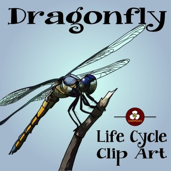 Dragonfly Life Cycle Clip Art