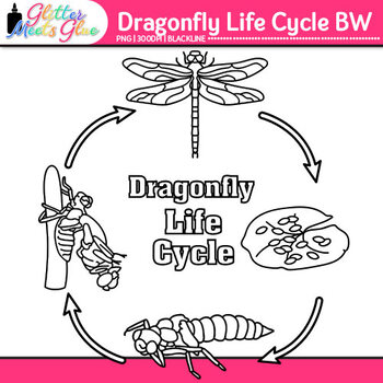Dragonfly Life Cycle Clip Art {Great for Animal Groups, Insect Resources} B&W