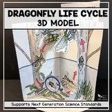 Dragonfly Life Cycle Model - 3D Model - Distance Learning