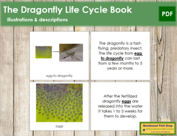 Dragonfly Life Cycle Nomenclature Book