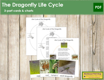 Dragonfly Life Cycle Nomenclature Cards and Charts