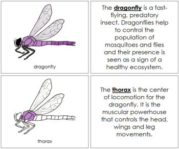 Dragonfly Nomenclature Book