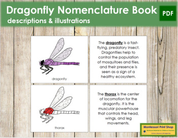 Dragonfly Nomenclature Book (Red)